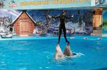 Дельфин де демеп… емдейді