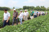 Наработки ученых – земледельцам